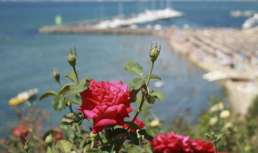 Святой Влас Розы