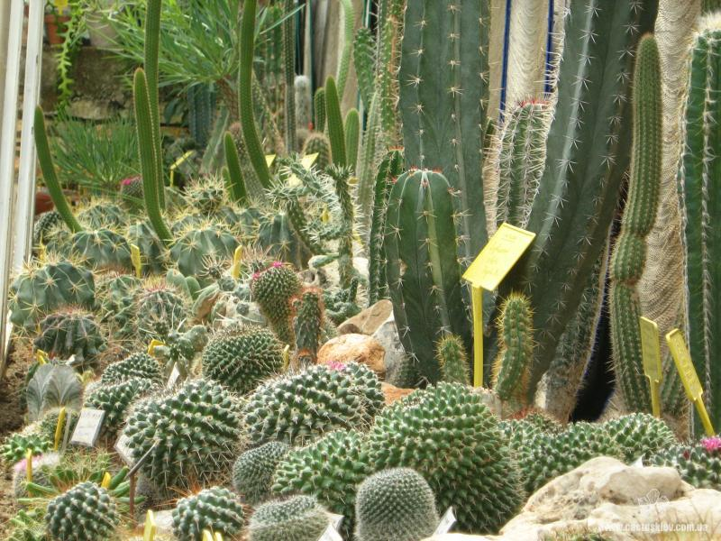 Ботанический сад в Балчик. Коллекция кактусов