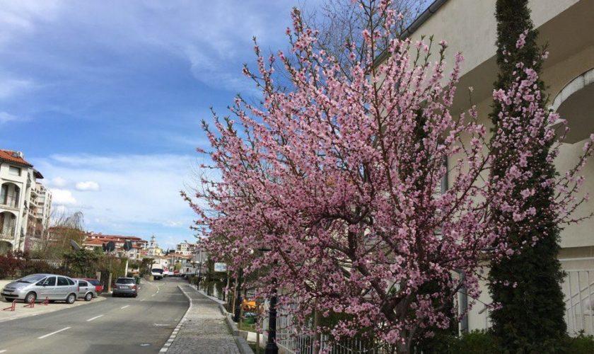 Весна в Святом Власе
