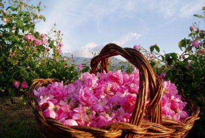 Фестиваль Роз (Rose Festival) в Болгарии в 2017 году